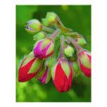Sobre al flor plantillas de membrete