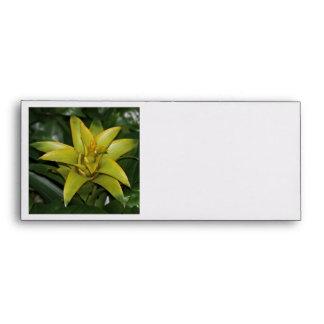 Sobre Bromeliad amarillo