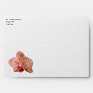 Sobre del blanco de la orquídea