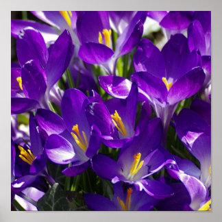 Sobrecarga púrpura impresiones