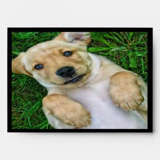 Sobres del perro de perrito del golden retriever