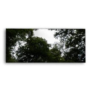 Sobres espeluznantes del bosque