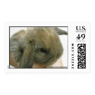 SoBunny Stamp - Large