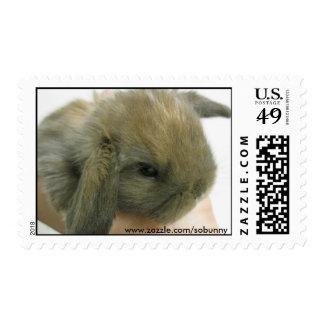 SoBunny Stamp - Medium