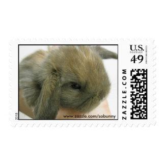 SoBunny Stamp - Small