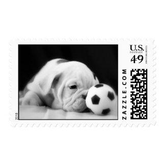 """Soccer Ball Nose"" English Bulldog Puppy Postage Stamp"