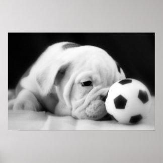 """""""Soccer Ball Nose"""" English Bulldog Puppy Poster"""