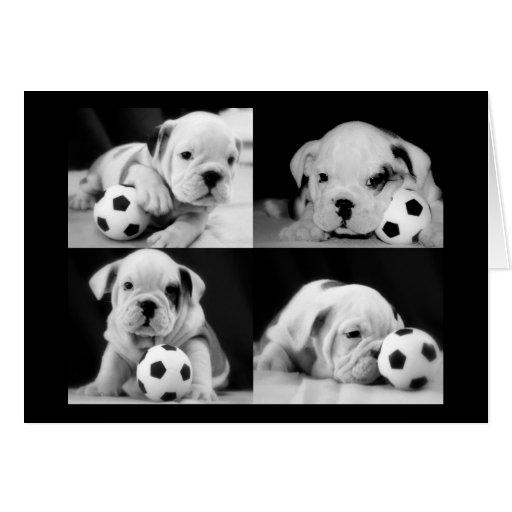 """Soccer Puppies"" English Bulldog Collage Card"
