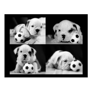 """Soccer Puppies"" English Bulldog Collage Postcard"
