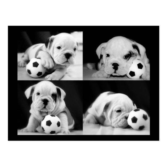 """Soccer Puppies"" English Bulldog Collage Postcard"