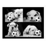 """Soccer Puppies"" English Bulldog Collage Postcards"