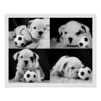 """Soccer Puppies"" English Bulldog Collage Posters"