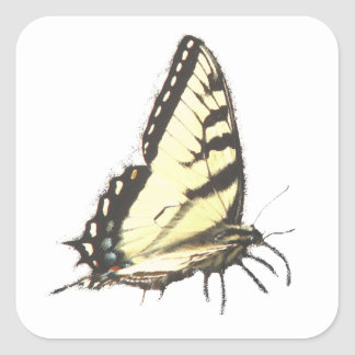 Social Butterfly Square Sticker