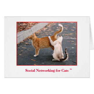 Social Networking for Cats Blank inside Greeting Card