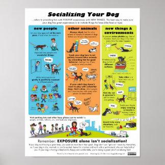 Socialización de su perro póster