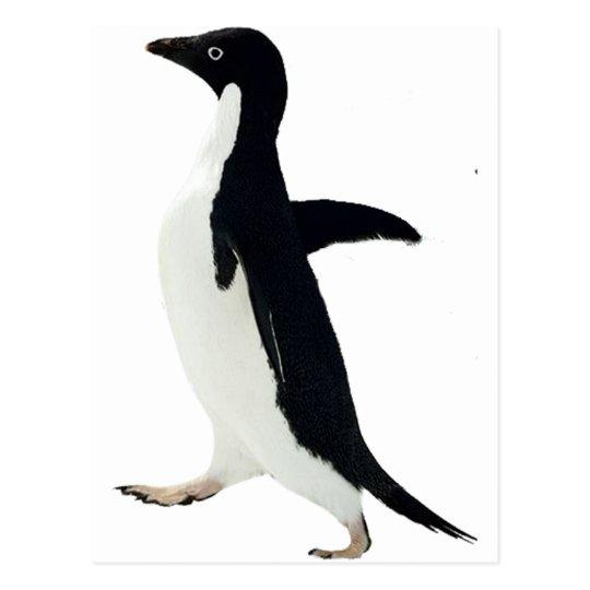 Socially Awkward Penguin Postcard