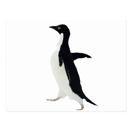 Socially awkward penguin postcard | Zazzle