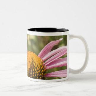 sociedad, simbiótico, ayudando, belleza, tazas de café