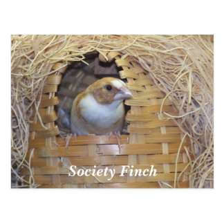 SOCIETY FINCH POSTCARD