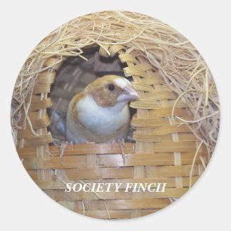 SOCIETY FINCH STICKER