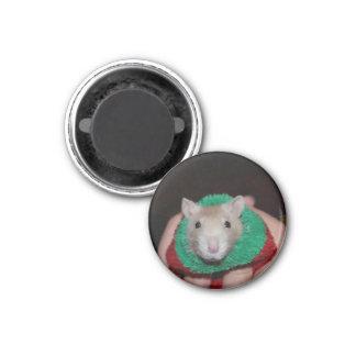 Sock Rat Magnet