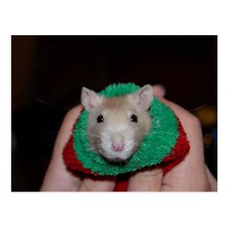 Sock Rat Post Card