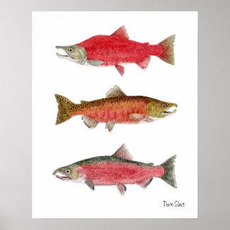 Sockeye, Chinook, salmón de Coho Póster
