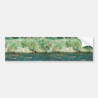 Sockeye Salmon Bumper Sticker