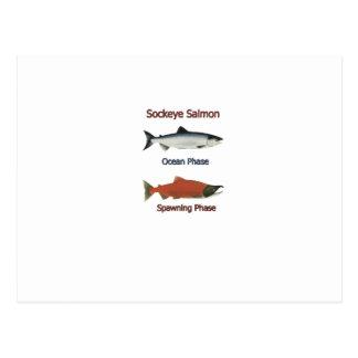 Sockeye Salmon phases Post Cards