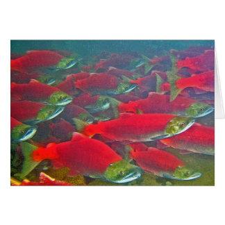 Sockeye Salmon Spawning Run Greeting Cards