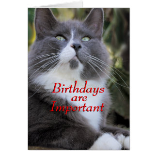 Socks cat  birthday card..- for any occasion