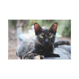 sofá al aire libre de Tejas con el gato de Cheshir Impresión En Lienzo