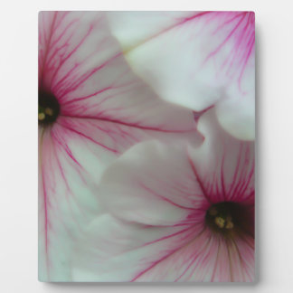 Soft and Delicate Pink Petunias Plaque