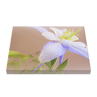 Soft And Lovely Columbine Flower Canvas Print