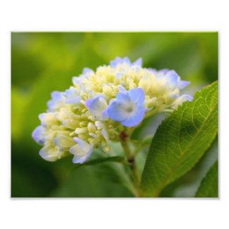 Soft Blue Hydrangea 10x8 Macro Flower Print Photo Art