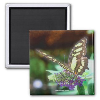 Soft Butterfly On Flower Nature Photography Magnet
