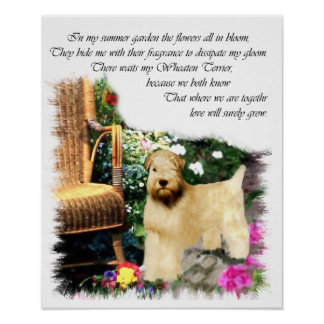 Soft Coated Wheaten Terrier Art Gifts Poster