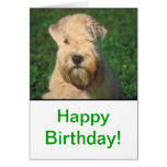 Soft Coated Wheaten Terrier Cards