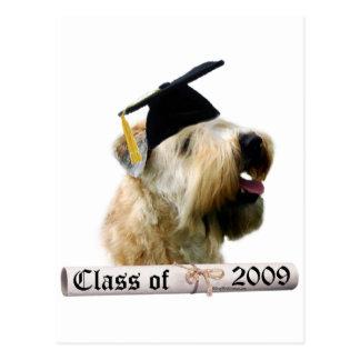 Soft Coated Wheaten Terrier Grad 09 Postcard
