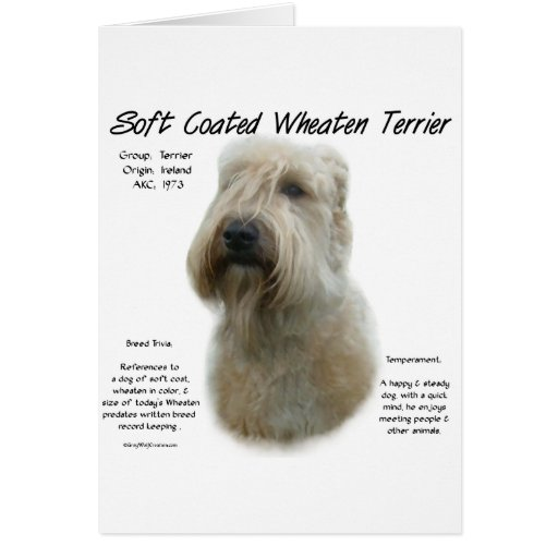 Soft Coated Wheaten Terrier History Design Card