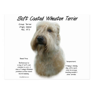 Soft Coated Wheaten Terrier History Design Postcard