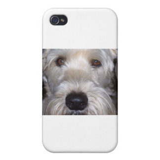 Soft Coated Wheaten Terrier iPhone 4 Covers
