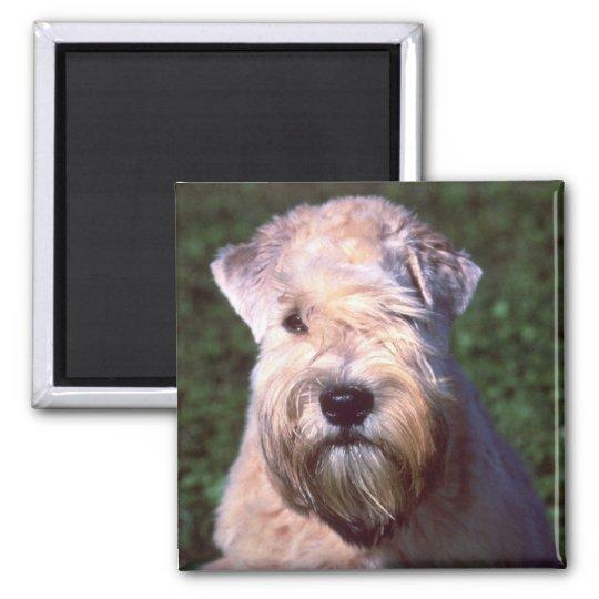 Soft-coated Wheaten Terrier Magnet