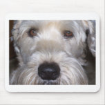 Soft Coated Wheaten Terrier Mouse Pad