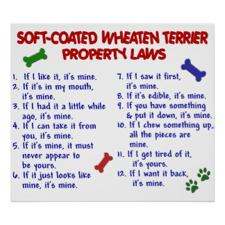 SOFT-COATED WHEATEN TERRIER PL2 POSTER