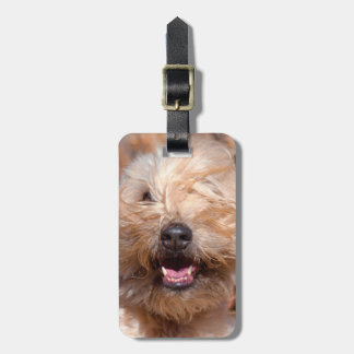 Soft Coated Wheaten Terrier portrait Bag Tag