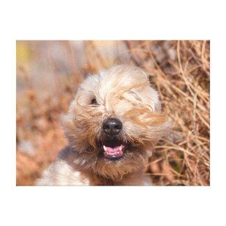Soft Coated Wheaten Terrier portrait Canvas Print