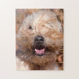 Soft Coated Wheaten Terrier portrait Jigsaw Puzzle