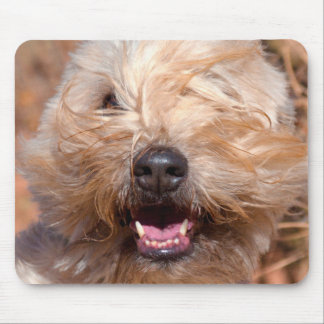 Soft Coated Wheaten Terrier portrait Mouse Pad