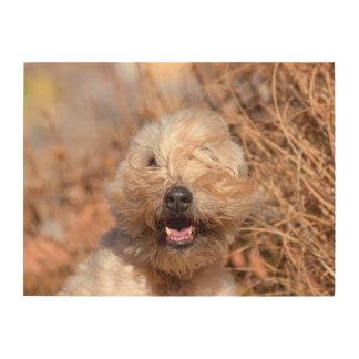 Soft Coated Wheaten Terrier portrait Wood Wall Decor